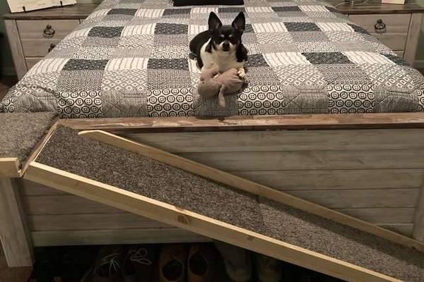 Sammy, il cagnolino che ha bisogno della rampa per salire sul letto