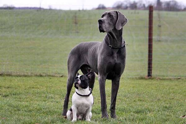 amicizia tra cani di razze diverse