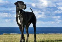 cane che passeggia in riva al mare
