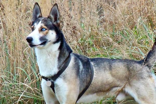 cane con il mantello bianco nero e marrone