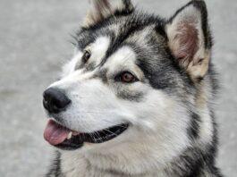 cane che vuole giocare col padrone