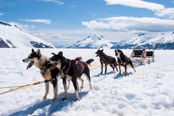 cani da slitta nelle terre del nord