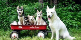 cani di taglia grande e di taglia piccola
