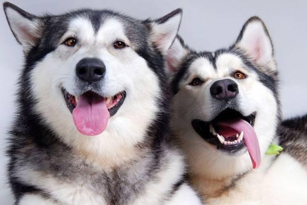 due cani che si divertono insieme