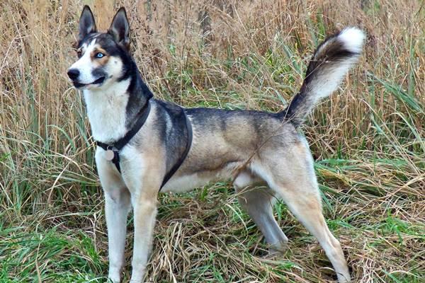 cane con il mantello bianco e marrone