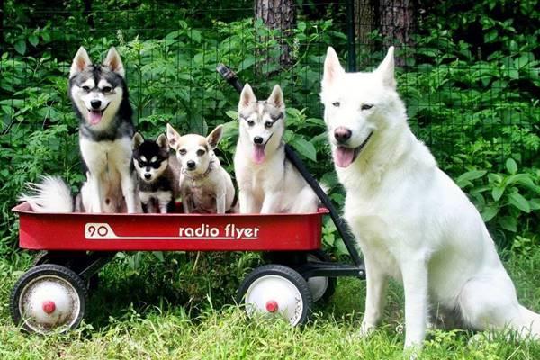 cagnolini su un carrello