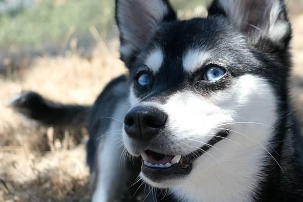 sguardo buffo del cane