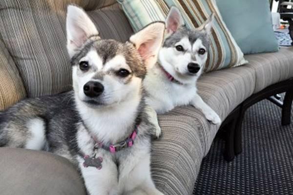 due cani che riposano sul divano