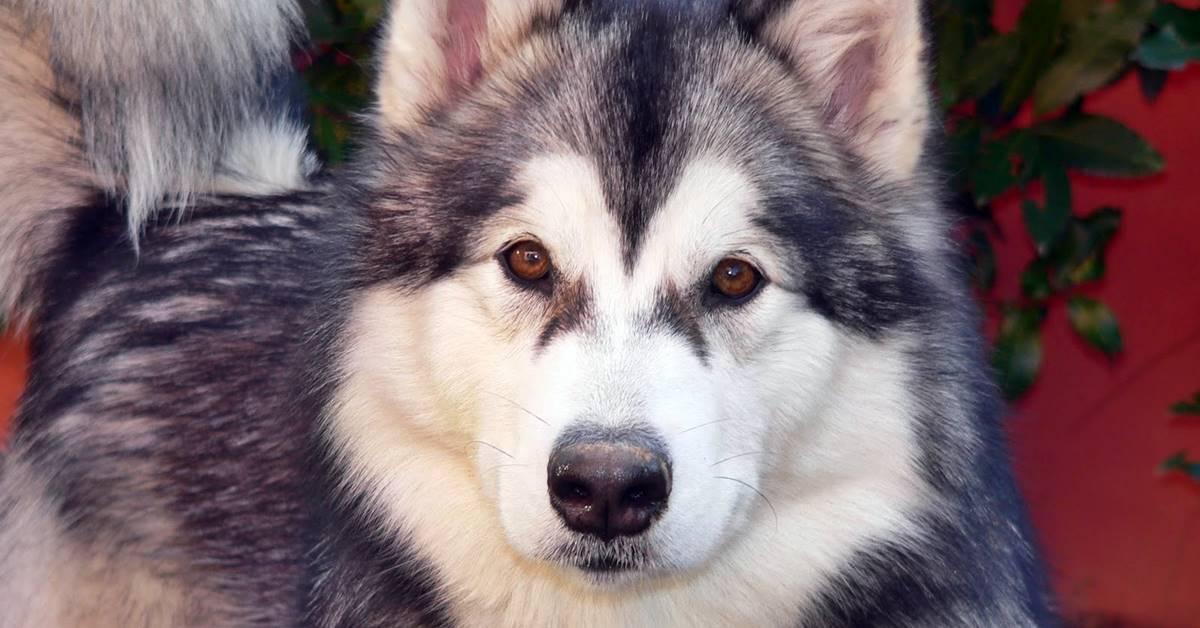 cane con gli occhi marroni