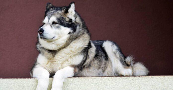 cane ha bisogno dei suoi spazi