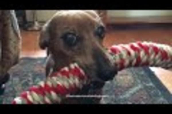 cane con corda