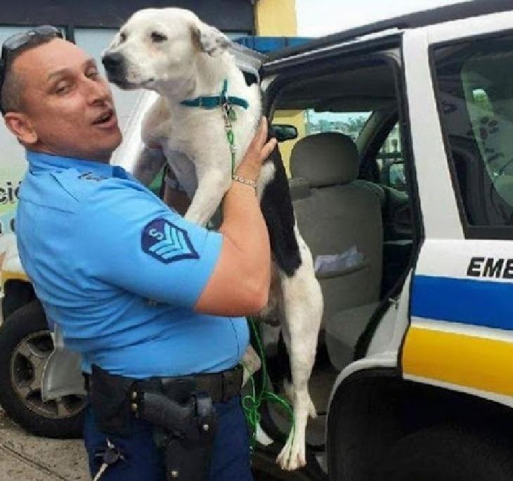 Cane di strada impaurito finisce per essere adottato dalla polizia (VIDEO)