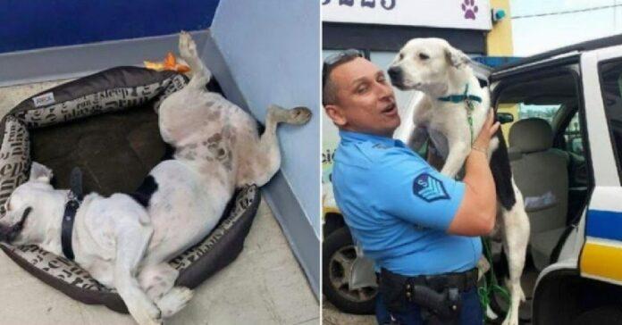 cane di strada finisce per essere adottato polizia