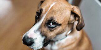 sguardo antipatico del cane