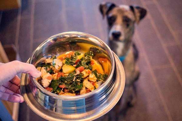Cani, quali sono i loro requisiti nutrizionali?