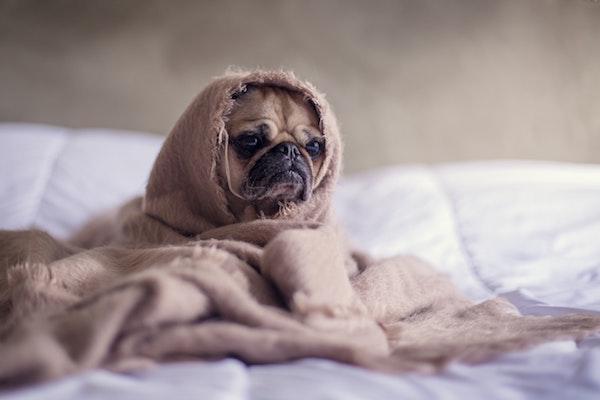 cucciolo di cane ansioso