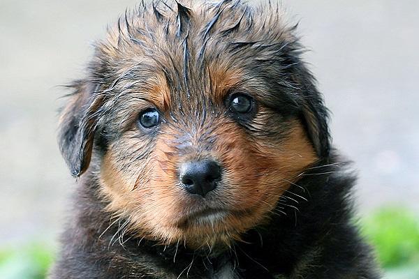 cane che sente freddo