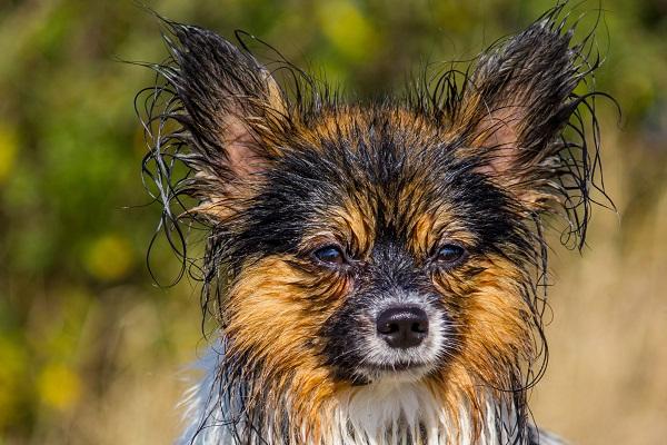 cane bagnato e infreddolito