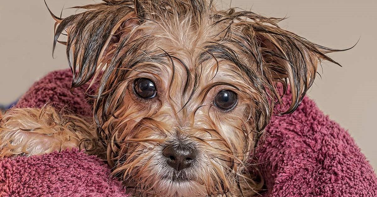cucciolo di cane avvolto in asciugamano