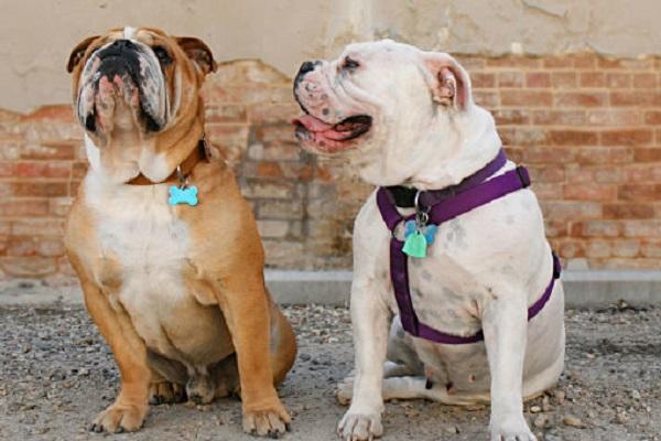 Cucciolo di cane, qual è il collare giusto? Ecco cosa bisogna sapere