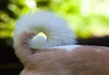 cucciolo di cane con la coda alzata