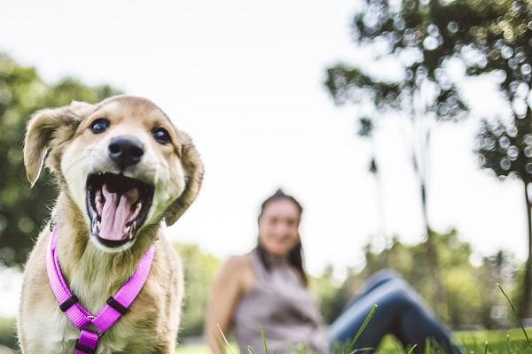 cane al parco che si diverte