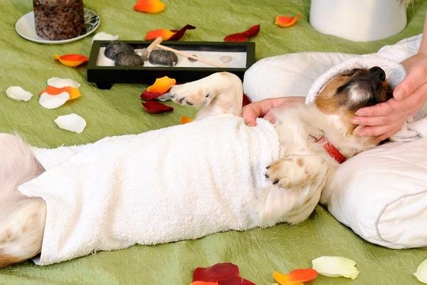 cane durante un massaggio relax