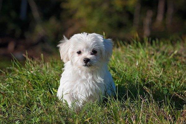 cucciolo pipì in giardino