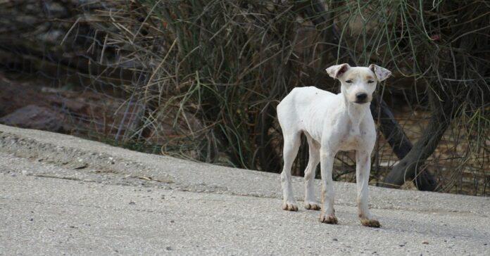 cane molto magro
