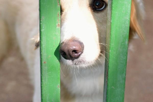 Cucciolo di cane sempre triste: cosa può significare? Cause e soluzioni
