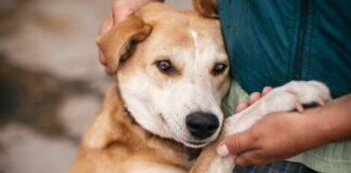 cane con l'espressione triste