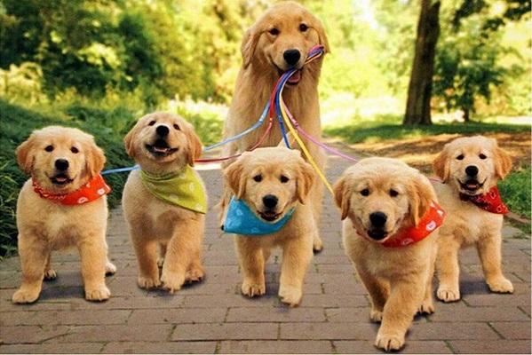 cuccioli di cane a passeggio con la mamma