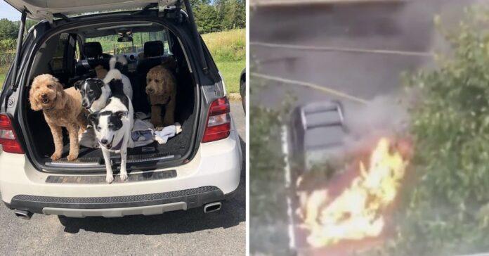 salvataggio 3 cuccioli intrappolati