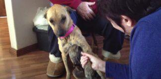 salvataggio lemming cane maltrattato traumatizzato