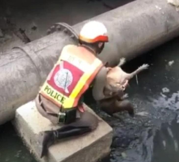 Il salvataggio di un cane caduto in un canale in Thailandia (VIDEO)