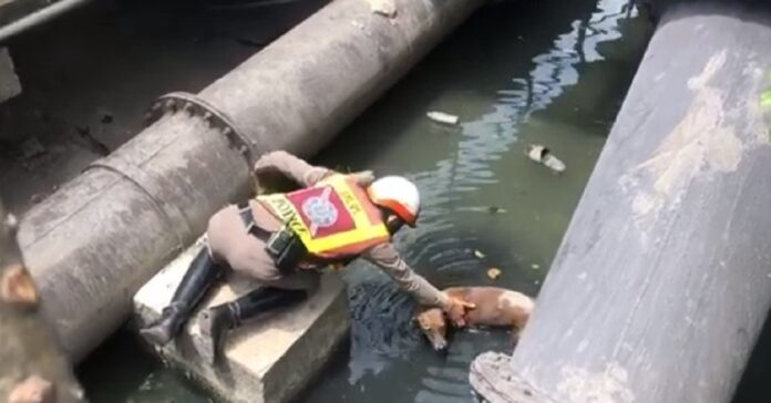 salvataggio cane caduto canale thailandia