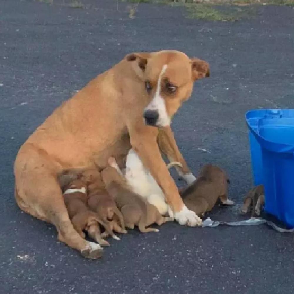 dory allatta cuccioli abbandonati