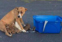 salvataggio mamma cane boxer e cuccioli