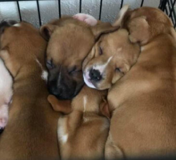 dory cuccioli adozione