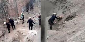 salvataggio cane sfortunato caduto dirupo