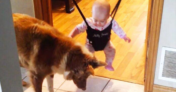 simpatico cane insegna a saltare piccola bimba