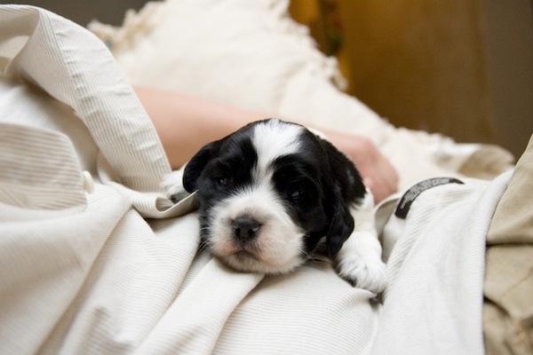 Nutrire il cane giovane: tutte le dritte e le indicazioni utili