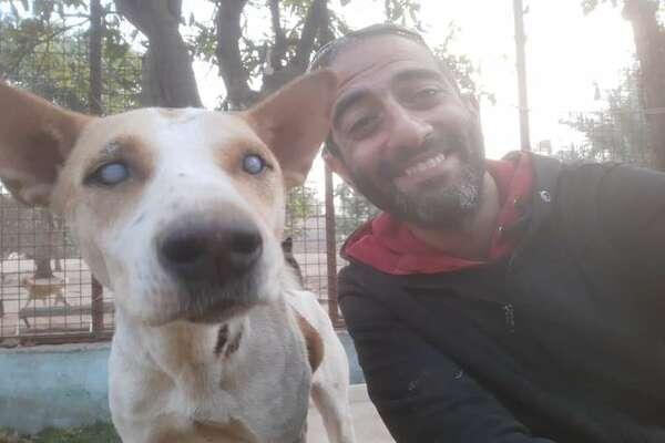 Arafa, il cagnolino cieco che quando sente la voce del suo migliore amico corre sempre a salutarlo (VIDEO)