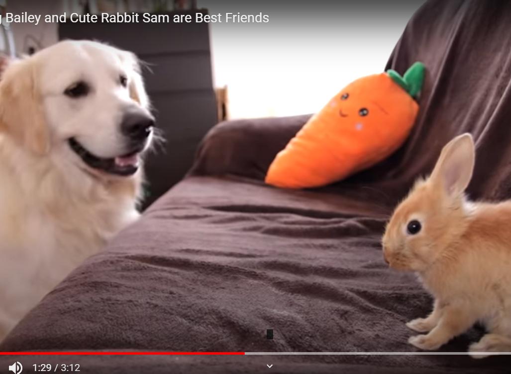 La storia di Bailey il cane e Sam il coniglio