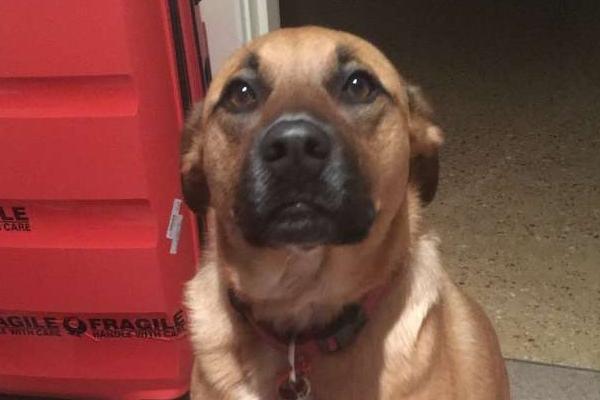Bonnie, la cagnolina che ha messo nella valigia del suo amico il suo giocattolo preferito