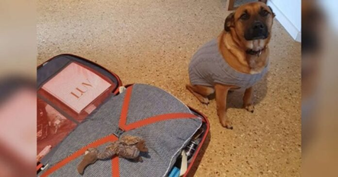 cane con giocattolo