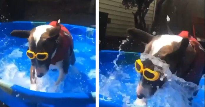Cane che gioca in piscina