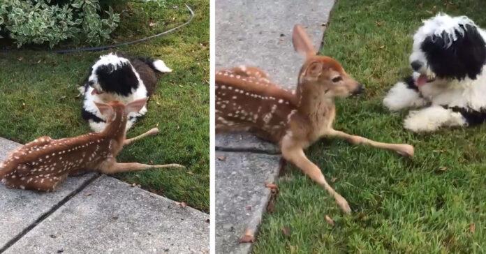 Cane con un cerbiatto