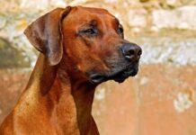 cane e omega 3