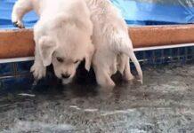 cuccioli bagno piscina video